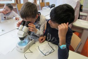Viertklässler beim Mikroskopieren