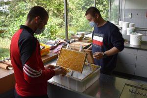 02.06.2020 Fleißige Bienen an der OHS