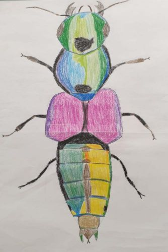 Käfer 7