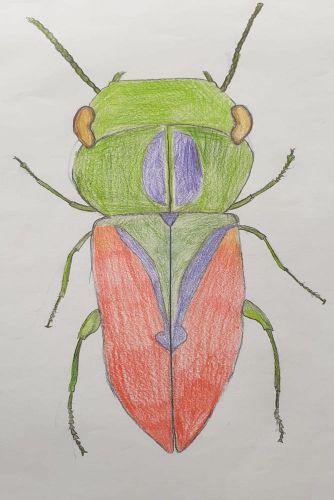 Käfer 8