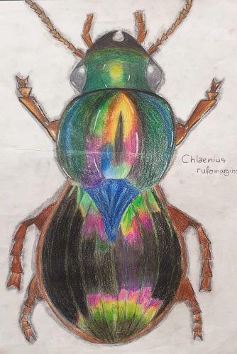 Käfer 9